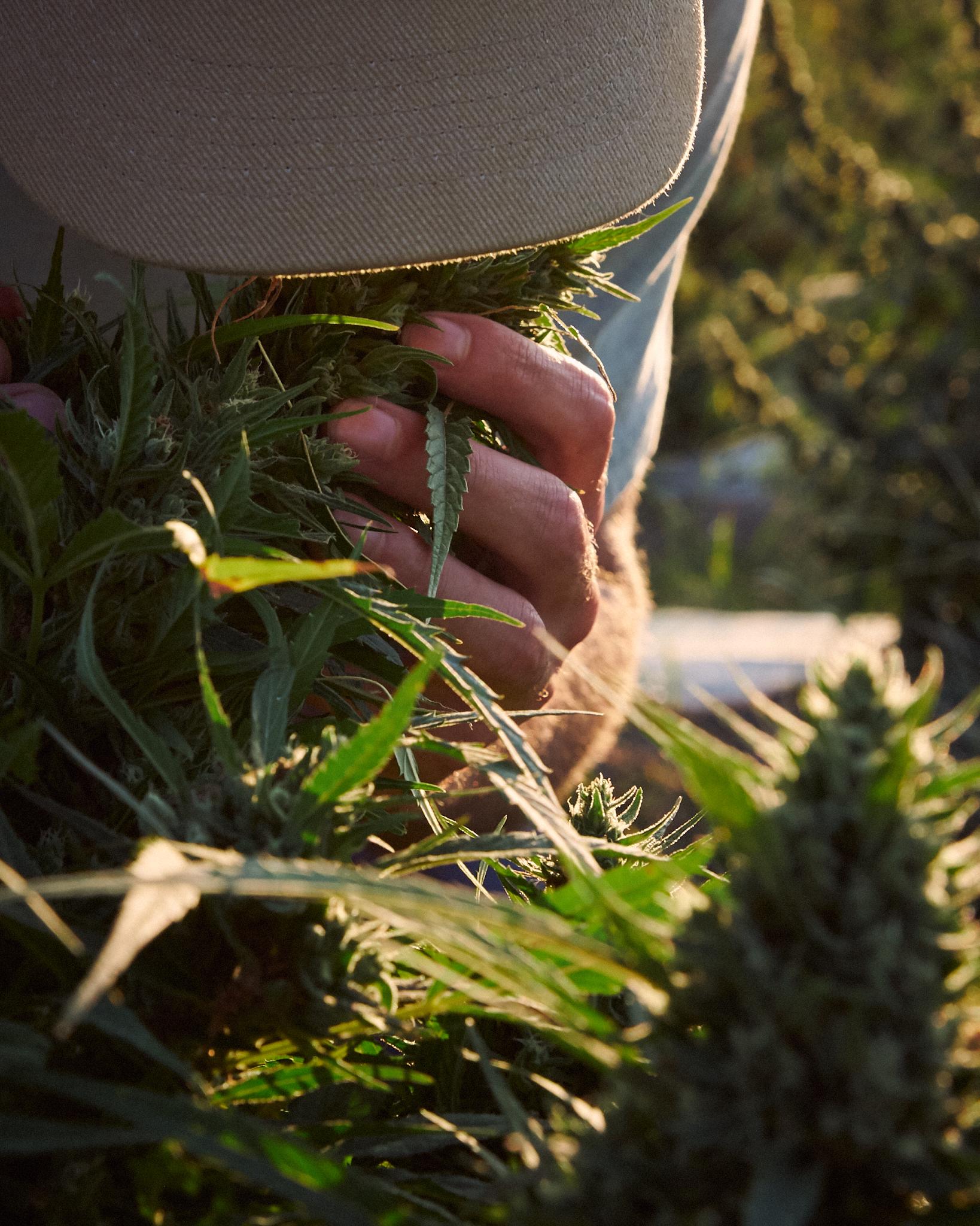 Farmer Smelling the Crop