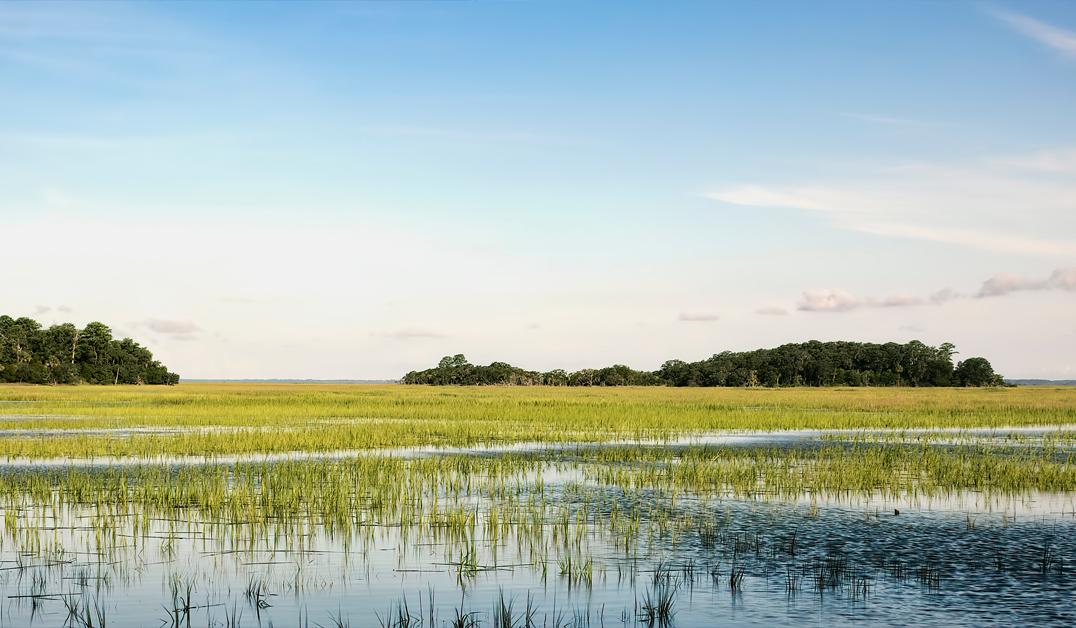 Lowcountry Marsh